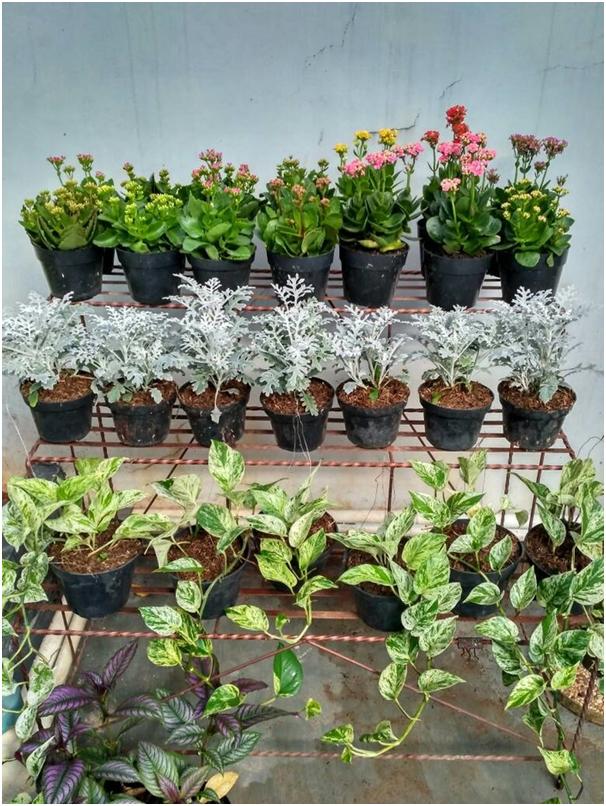 letakkan pot bunga pada taman belakang rumah » Kumpulan Ide Kreatif Mendekorasi Taman Belakang Rumah