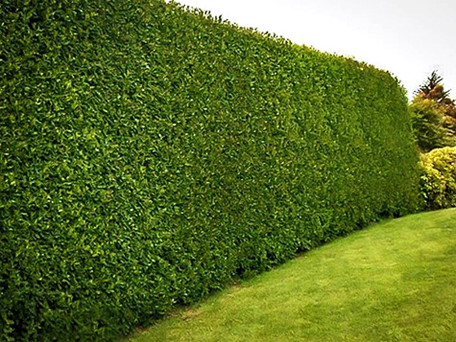 pagar rumah dari tanaman » Ide Membangun Pagar Rumah yang Menarik