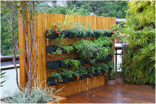 tanaman dinding untuk taman belakang rumah » Kumpulan Ide Kreatif Mendekorasi Taman Belakang Rumah